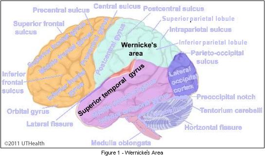 neuroanatomy lab online, lab 1 page 18, Human Body